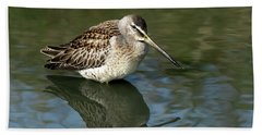 Beach Sheet featuring the photograph Short-billed Dowitcher by Sharon Talson