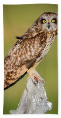 Short Eared Owl Beach Towel