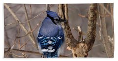 Shy Blue Jay  Beach Towel by David Porteus