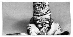 Shy Cat Beach Sheet