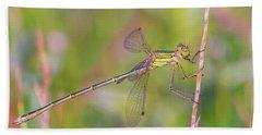 Shy Emerald Damselfly - Lestes Barbarus Beach Sheet