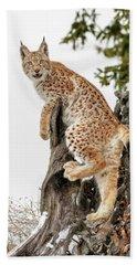 Siberian Lynx Kitten Beach Towel