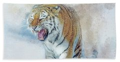 Siberian Tiger In Snow Beach Towel by Brian Tarr