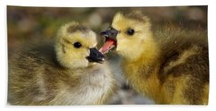 Beach Towel featuring the photograph Sibling Love - Baby Canada Geese by Sue Harper