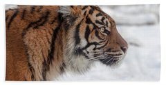 Side Portrait Of A Sumatran Tiger In The Snow Beach Towel