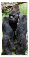 Silverback Gorilla At The San Francisco Zoo San Francisco California 5d3182 Beach Towel