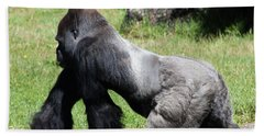 Silverback Gorilla At The San Francisco Zoo San Francisco California 5d3184 Beach Towel