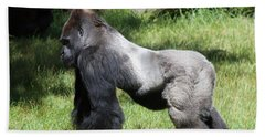 Silverback Gorilla At The San Francisco Zoo San Francisco California 5d3185 Beach Towel