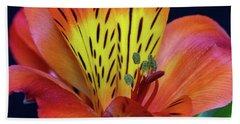 Single Alstroemeria Inca Flower-1 Beach Towel