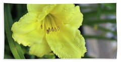 Single Yellow Day Lily Up Close Beach Towel