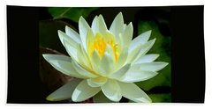 Single Yellow Water Lily Beach Towel