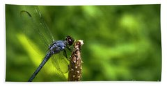 Beach Towel featuring the photograph Sitting Pretty 2 Dragonfly Art by Reid Callaway