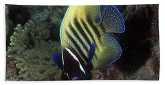 Six Banded Angelfish, Great Barrier Reef Beach Sheet