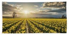 Beach Towel featuring the photograph Skagit Daffodils Bright Sunstar Dusk by Mike Reid