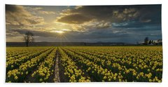 Beach Towel featuring the photograph Skagit Daffodils Golden Sunstar Evening by Mike Reid