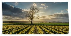 Beach Towel featuring the photograph Skagit Daffodils Lone Tree  by Mike Reid