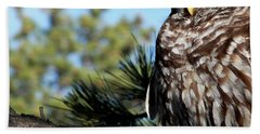 Sleeping Barred Owl Beach Towel