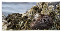 Sleeping Otter Beach Towel