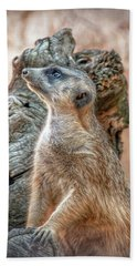 Beach Towel featuring the photograph Slender-tailed Meerkat by Hanny Heim