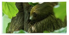 Sloth Sleeping Beach Towel