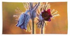 Small Pasque Flower, Pulsatilla Pratensis Nigricans Beach Towel