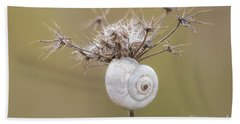 Small Snail Shell Hanging From Plant Beach Towel by Gurgen Bakhshetsyan