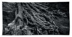 Beach Towel featuring the photograph Smugglers' Notch Vermont Trees And Roots 1 by James Aiken