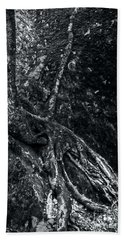 Beach Towel featuring the photograph Smugglers' Notch Vermont Trees And Roots 3 by James Aiken