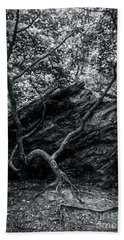 Beach Towel featuring the photograph Smugglers' Notch Vermont Trees And Roots 4 by James Aiken