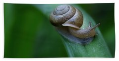 Snail In The Morning Beach Towel