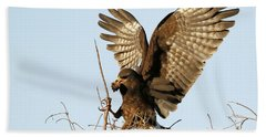 Snail Kite Coming In Beach Towel