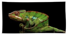 Sneaking Panther Chameleon, Reptile With Colorful Body On Black Mirror, Isolated Background Beach Sheet by Sergey Taran