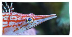 Snooty The Hawkfish Beach Towel