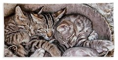Snoring Purrs Of Kitten Brothers Beach Towel