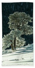 Snow Covered Tree - 9182 Beach Towel