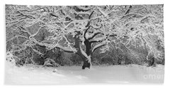 Snow Dusted Tree Beach Towel