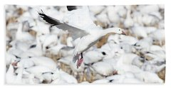 Snow Goose Lift-off Beach Towel