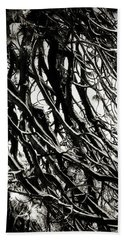 Snow On Pine Boughs Beach Towel by Timothy Bulone