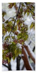 Beach Towel featuring the photograph snow on the Cherry blossoms by Chris Flees