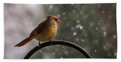 Beach Sheet featuring the photograph Snow Showers Female Northern Cardinal by Terry DeLuco