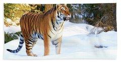 Snow Tiger Beach Towel by Steve McKinzie