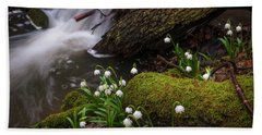 Beach Towel featuring the photograph Snowdrops Flowers In Spring Forest by Jenny Rainbow