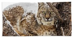 Snowy Bobcat Beach Towel