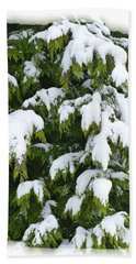 Beach Towel featuring the photograph Snowy Cedar Boughs by Will Borden