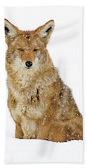 Snowy Coyote Beach Towel
