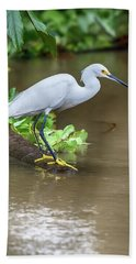Beach Towel featuring the photograph Snowy Egret by John Haldane
