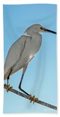 Snowy Egret Beach Towel by Robert Bales