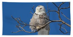 Snowy Owl 7 Beach Towel
