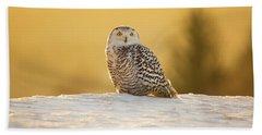Snowy Owl Beach Sheet