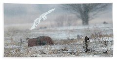 Snowy Owl In Flight 3 Beach Towel by Gary Hall